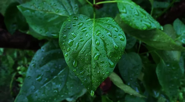 Raindrop Technique – The Ultimate Massage Relaxer